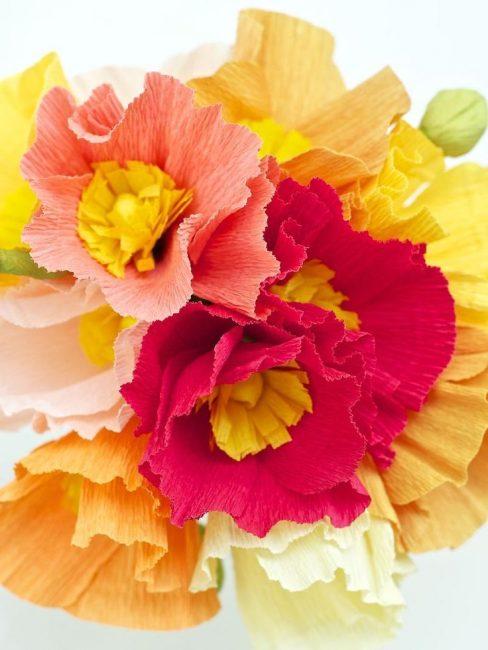 Güzel renkli çiçekler