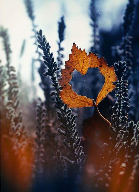 Cinta setiap musim