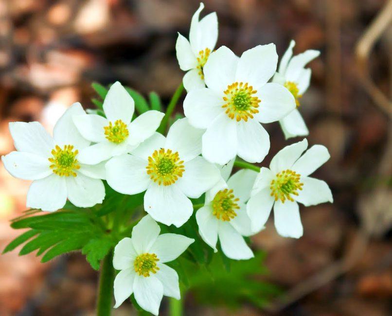하얀 꽃잎 매료