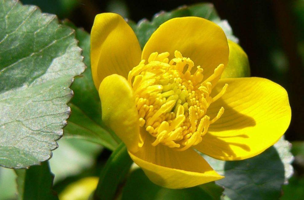 특이한 밝은 노란색 꽃잎