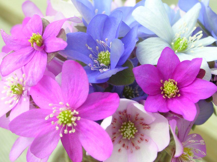 밝고 색이 다른 꽃잎
