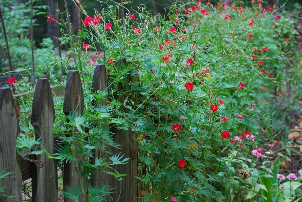 빨간 악센트가있는 아름다운 식물