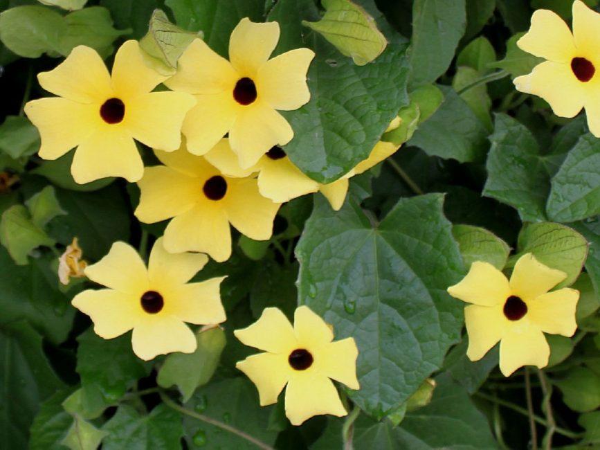 흥미 진진한 순진한 꽃