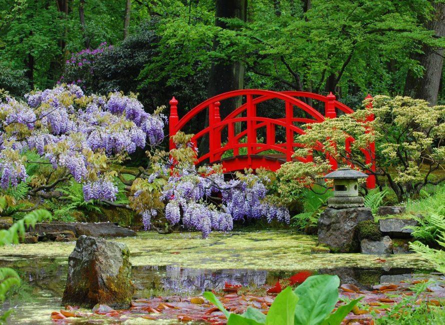 Bunga Sakura mewakili kesucian dan ketahanan