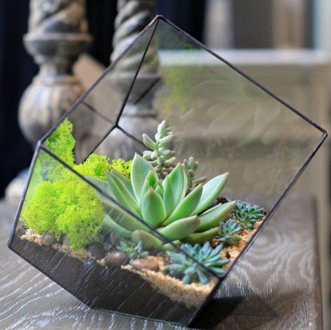 천천히 성장하는 소형 실내 식물