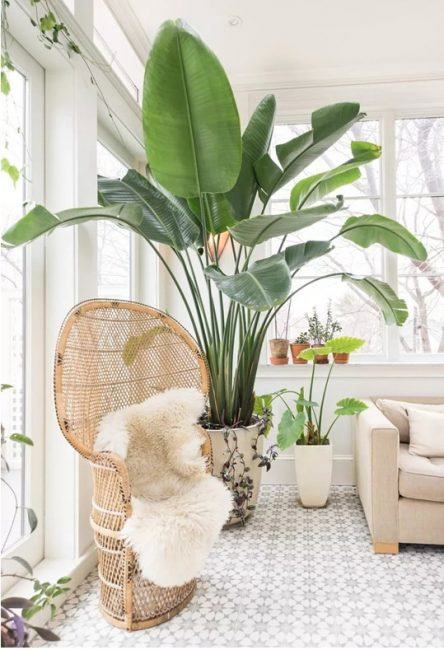 Tumbuhan di ruang tamu untuk percutian keluarga yang lebih selesa