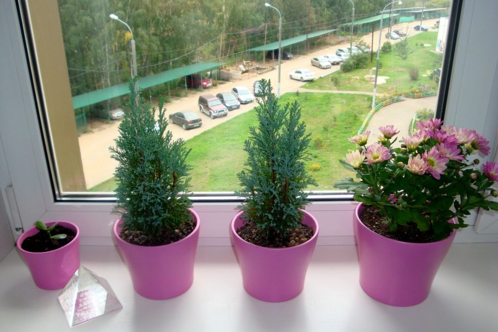 식물들은 서로 조화를 이루어야합니다.