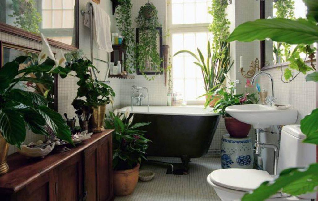 Spathiphyllum, Dieffenbachia, 담쟁이 및 욕실에있는 다른 식물