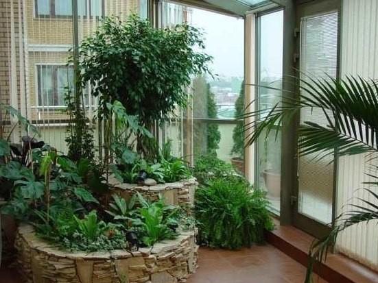 Garis geometri apabila menanam tumbuhan