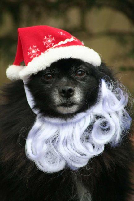 Santa Claus peribadi anda