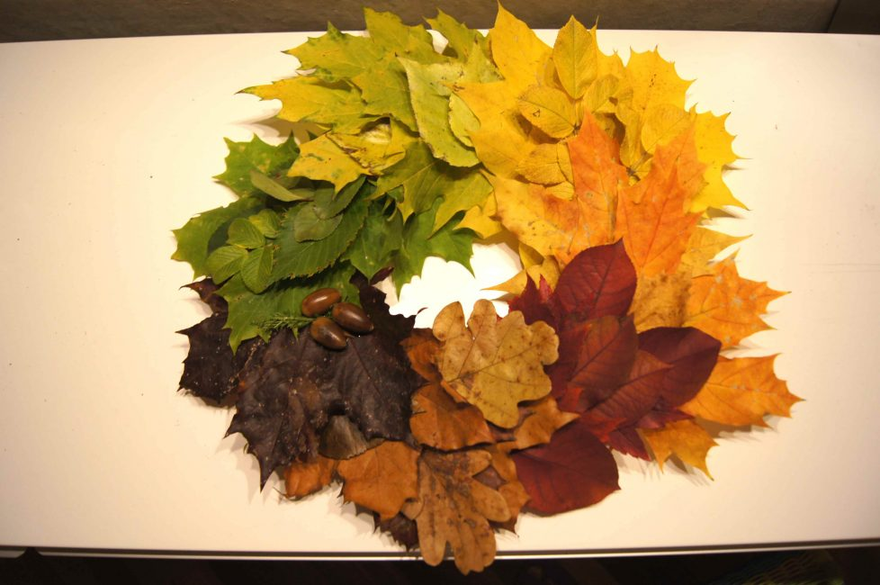 Dengan tangkai daun, anda boleh mengikat bunga ke pangkalan