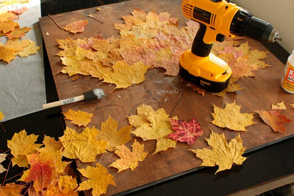 Gosok daun di seluruh kawasan daun dicatnya.