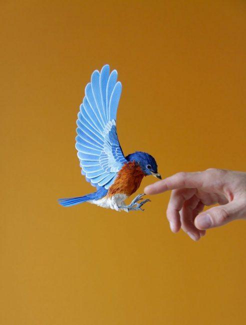 Tatlı kuşlar kendin yap