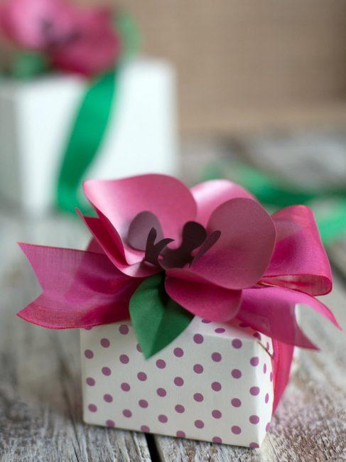 Güzel orkide harika bir dekorasyon görevi görecek
