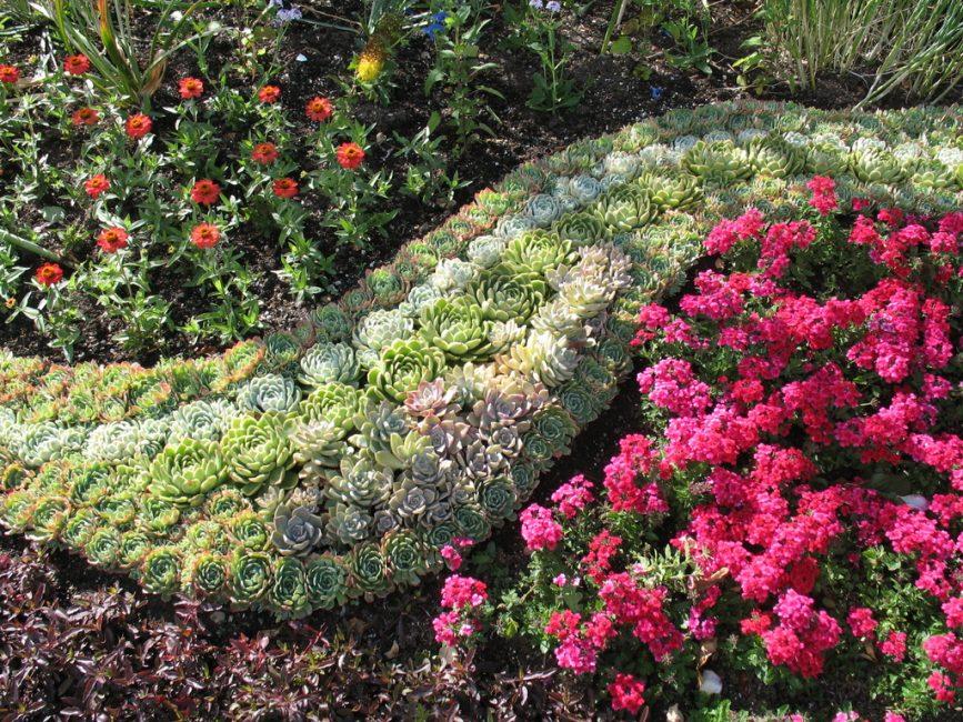 Succulents dalam reka bentuk landskap