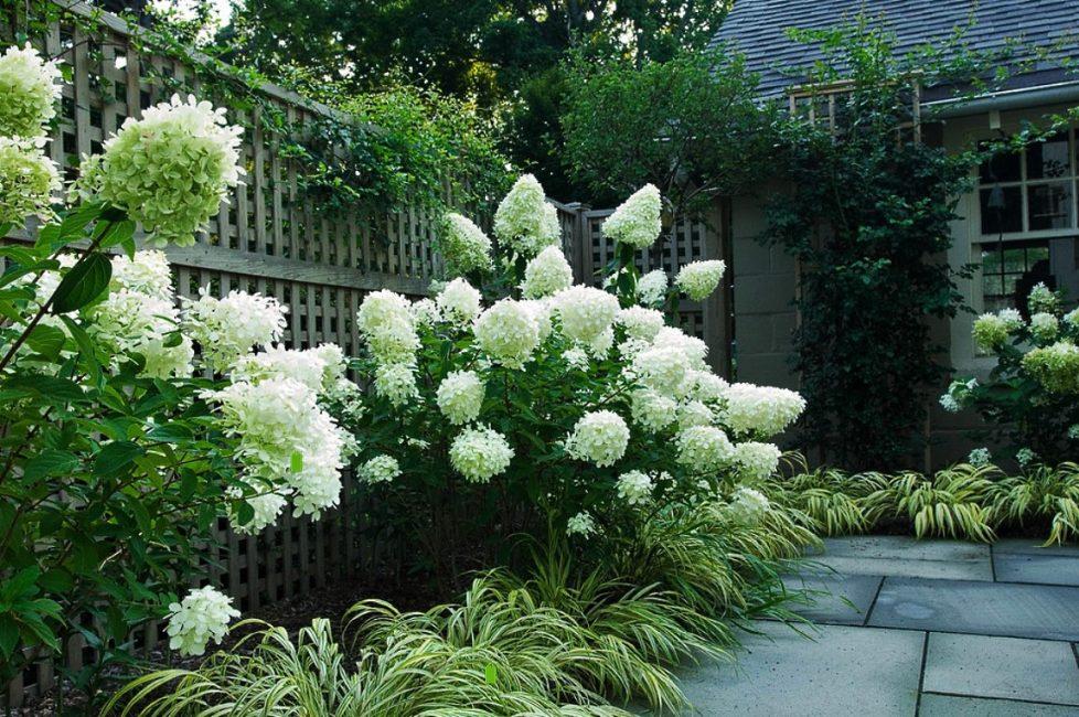 Gabungan tumbuhan hijau dan putih