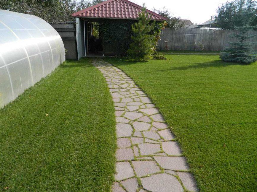 Rumput antara jahitan untuk mengekalkan kelembapan