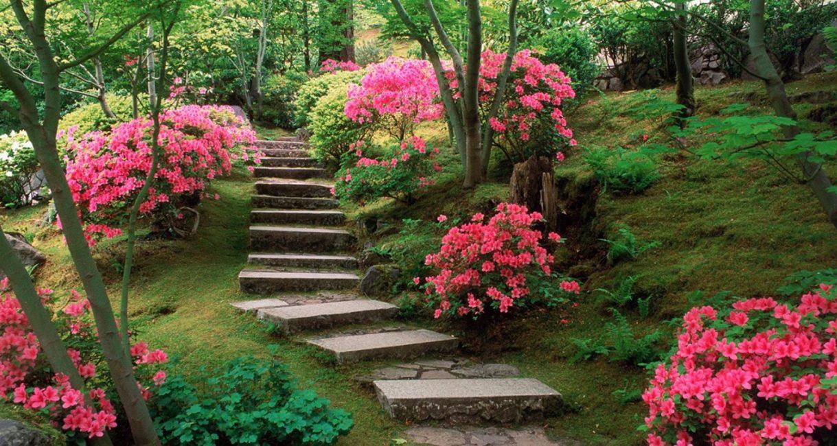Musim panas adalah masa berbunga banyak spesies tahunan.