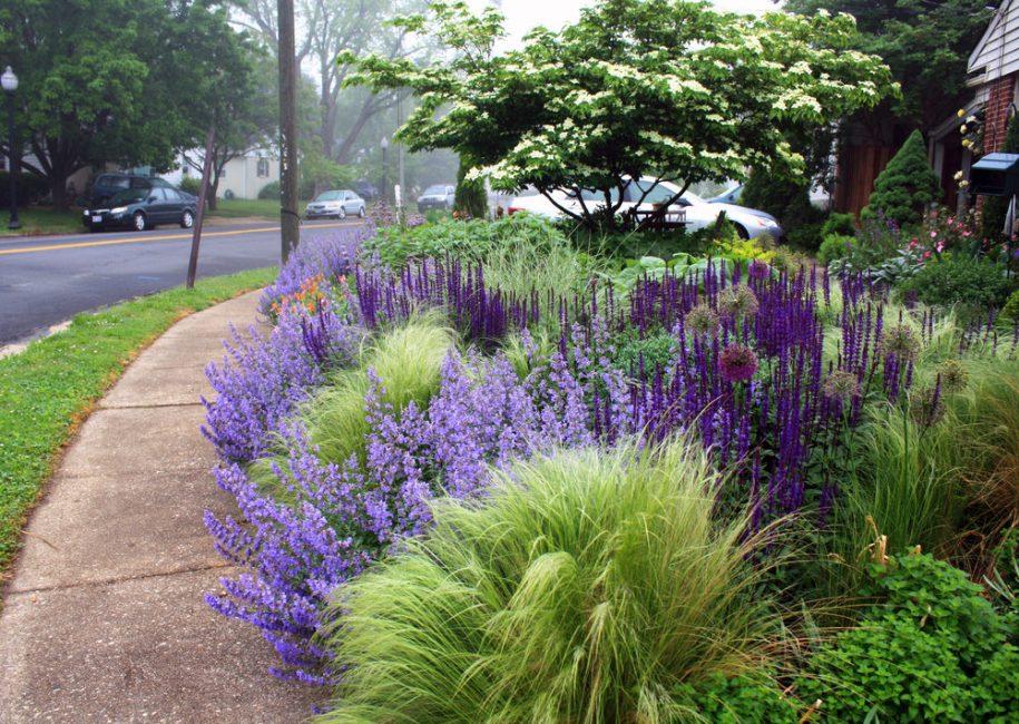 Katil Lavender Aromatik