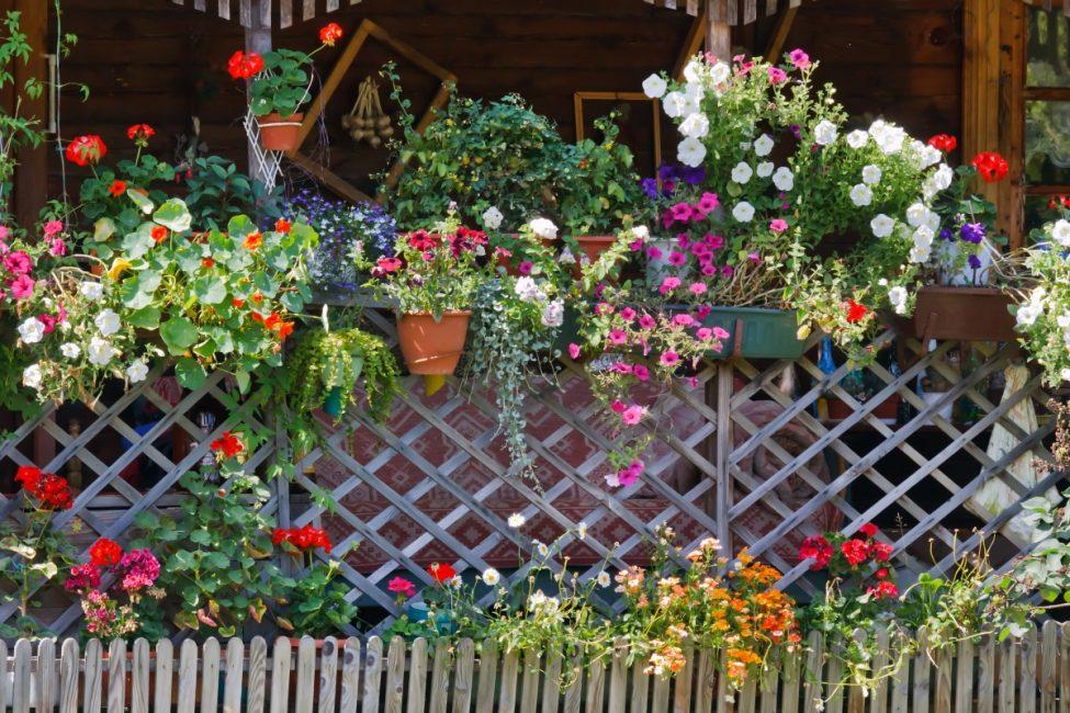 꽃으로 장식 된 아름다운 울타리