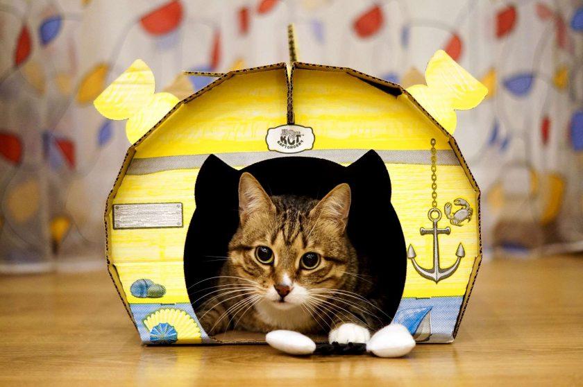 Rumah Untuk Kucing Dengan Tangan Anda Sendiri 150 Foto Membuat Langkah Demi Langkah
