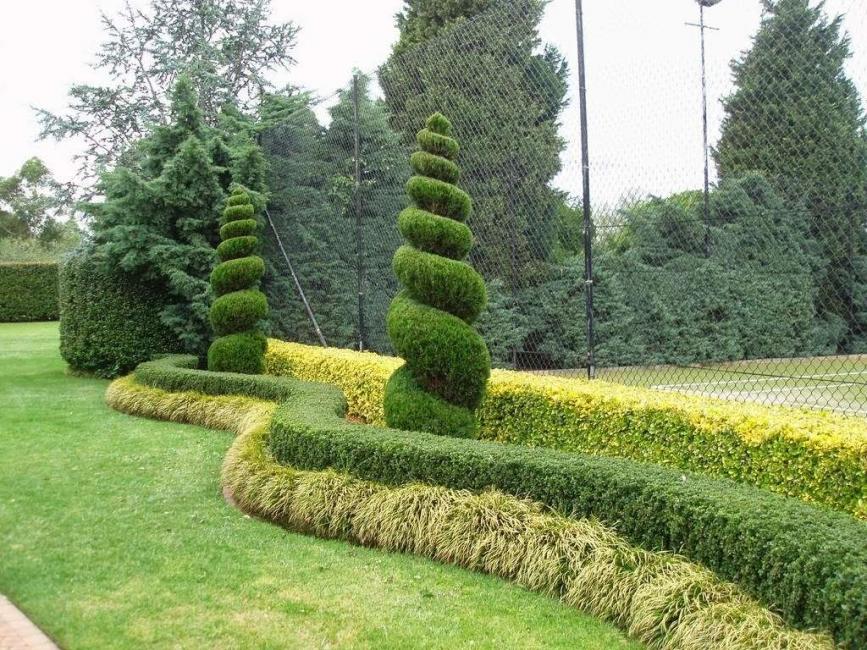 È consuetudine utilizzare non solo piantare arbusti