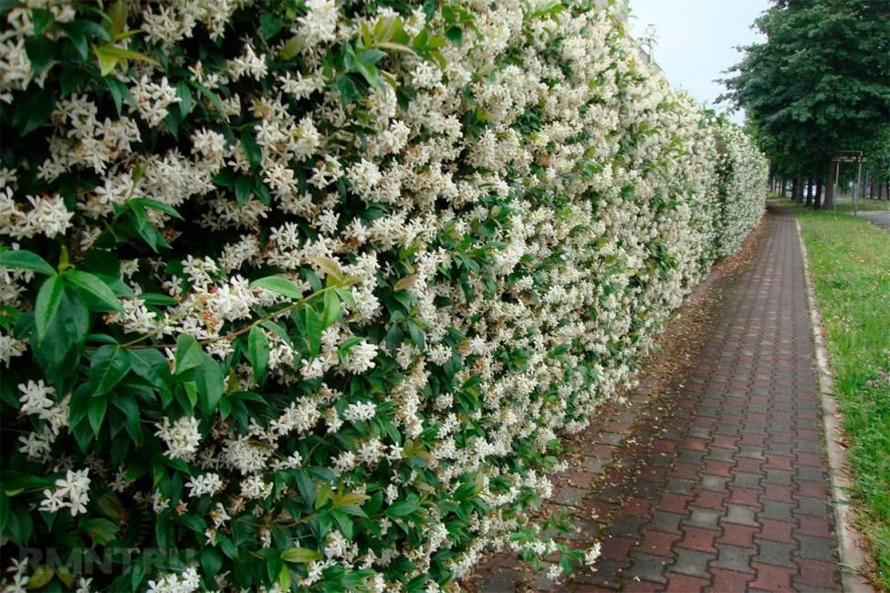 La recinzione fiorita è bella in ogni momento dell'anno.