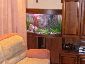 Akuarium di pedalaman sebuah apartmen atau rumah: 145+ (Foto) jenis untuk hiasan reka bentuk anda (sudut, kering, partition, kecil)