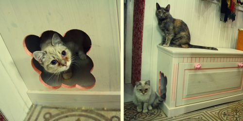 Bagaimana untuk membuat rumah untuk kucing dengan tangan anda sendiri langkah demi langkah? 150+ (gambar) kayu, kadbod, kotak, dengan pengikis