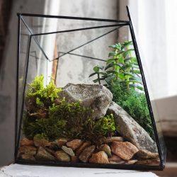 Melodi tumbuhan dalaman dan penjagaan mereka di rumah (175+ Foto). Peraturan pakar emas