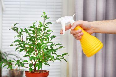 멜로디 실내 식물과 가정에서 그들을 (175 + 사진)을 돌보는.전문가의 황금률