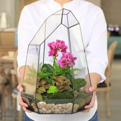 멜로디 실내 식물과 가정에서 그들을 (175 + 사진)을 돌보는. 전문가의 황금률